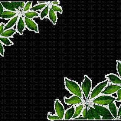Frame wonderful picture images. Leaf border png