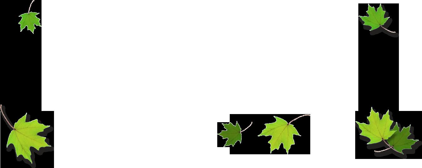 Leaf border png. Images of leaves spacehero