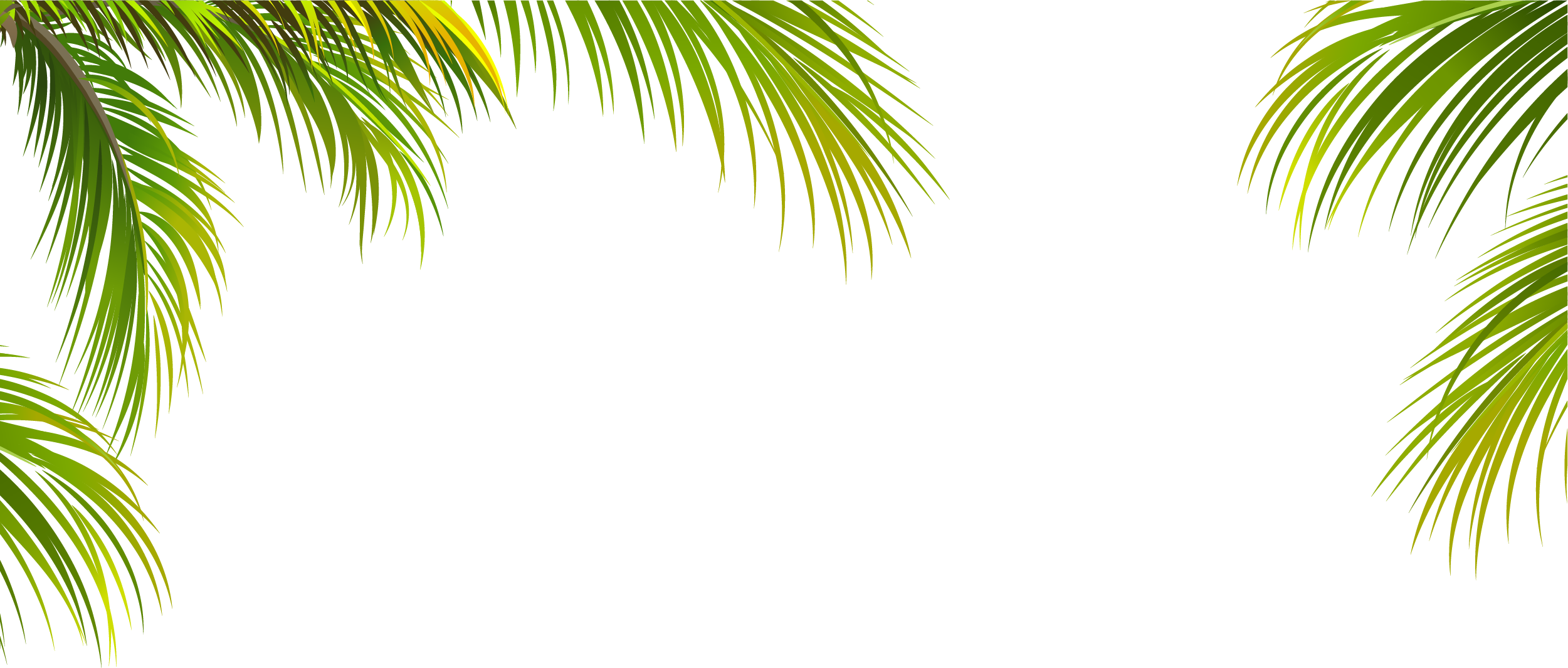 Coconut arecaceae tree green. Leaf border png