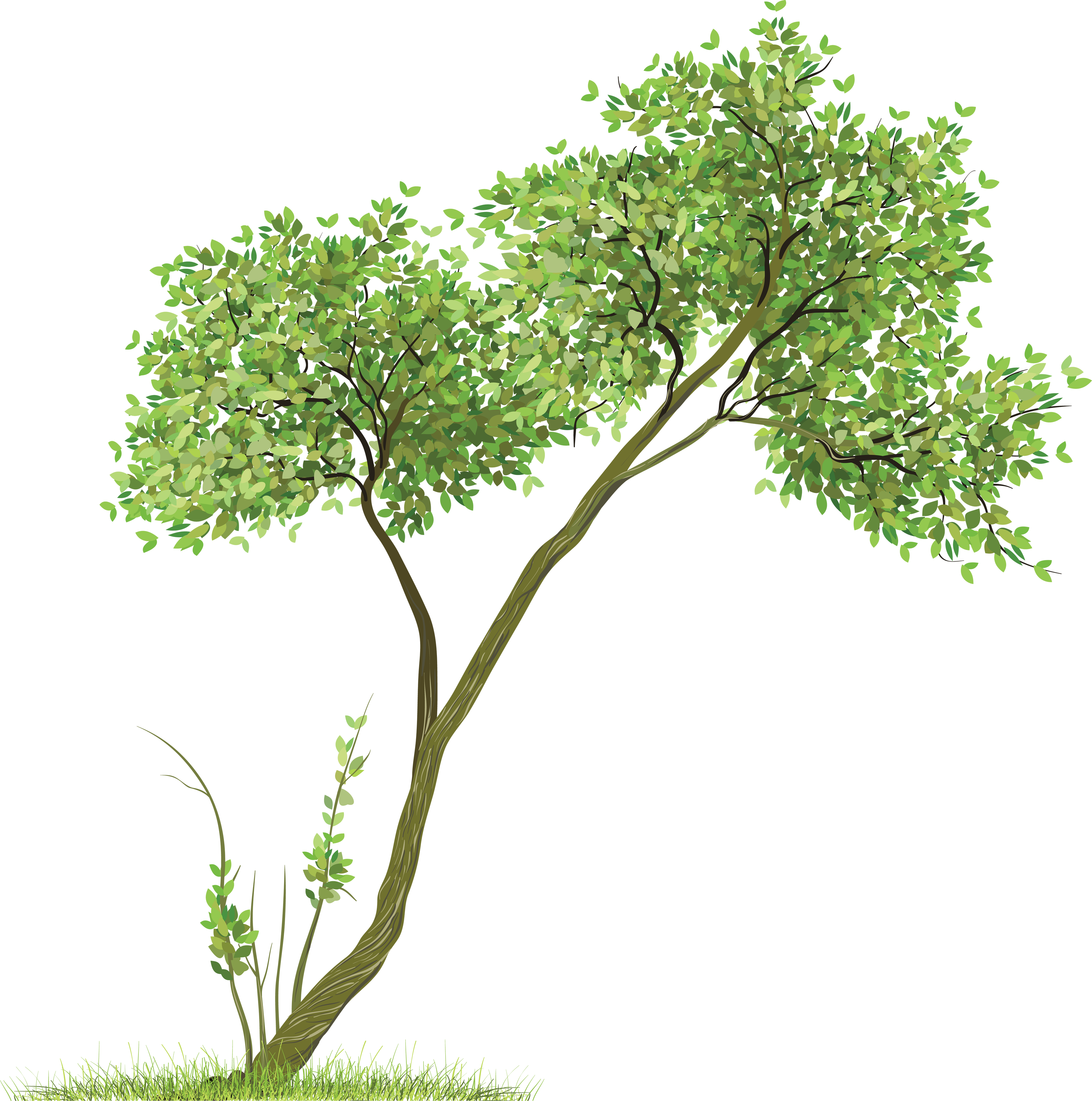Download tree transparent image. Free png images for photoshop