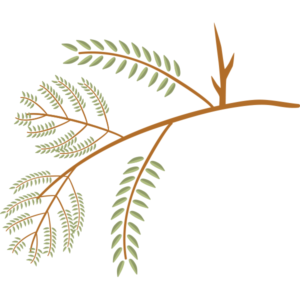Id honeylocust. Leaf clipart black locust