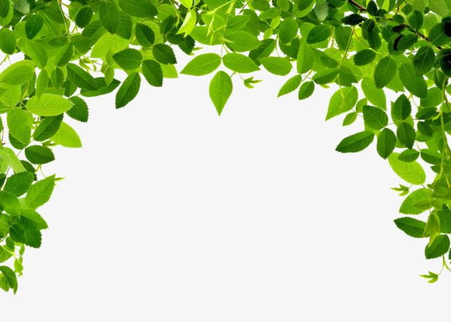 Leaves border png green. Leaf clipart borders