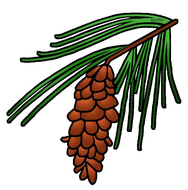 Leaf clipart pine tree. North carolina maine state