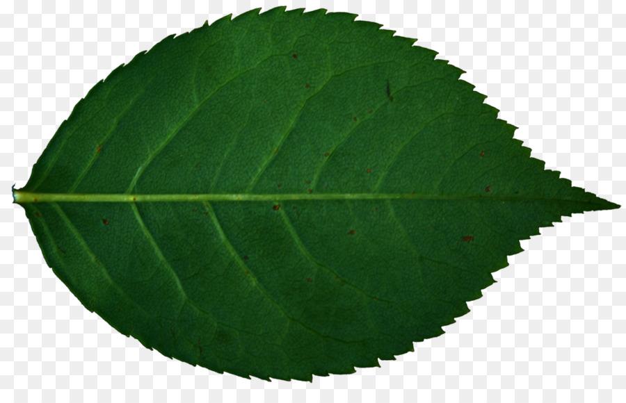 Transparent clip art . Rose clipart leaf