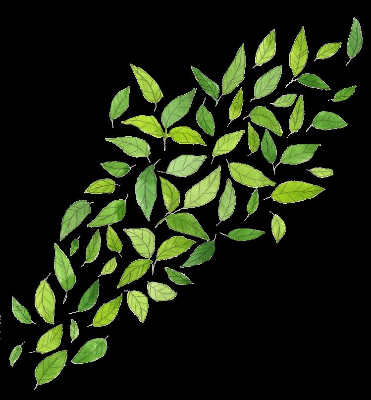 Leaf clipart twig. Leaves png by milkyanunnie