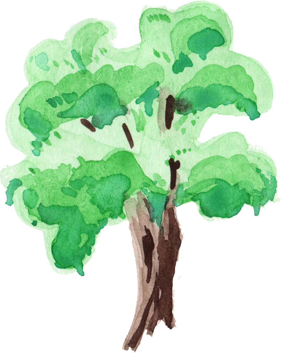 tree png transparent. Palm clipart watercolor