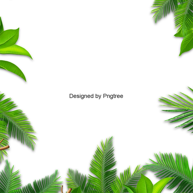 Green palm leaf and. Leaves border png