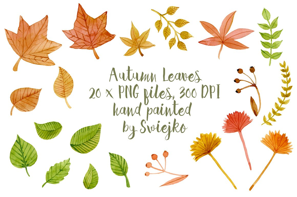 Leaves clipart. Autumn illustrations creative market