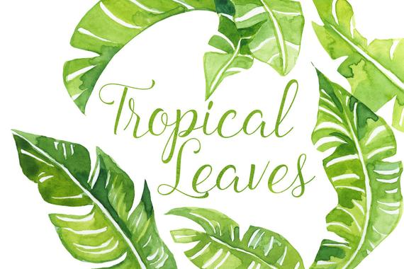 Leaves clipart illustration. Watercolor tropical palm clip