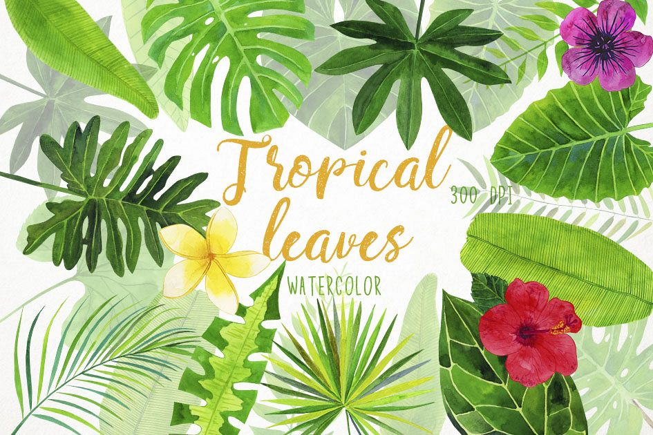 Watercolor tropical palm clip. Leaves clipart illustration