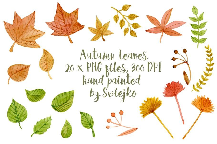 Leaves clipart illustration. Autumn illustrations creative market