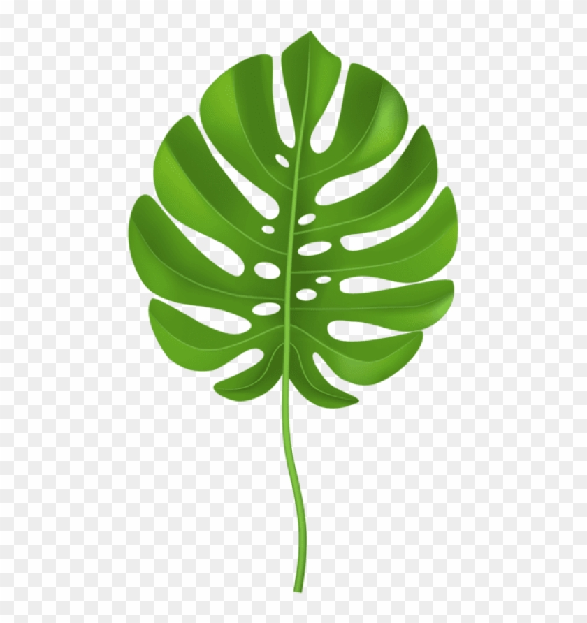 Free png download tropical. Palm clipart palm leaf