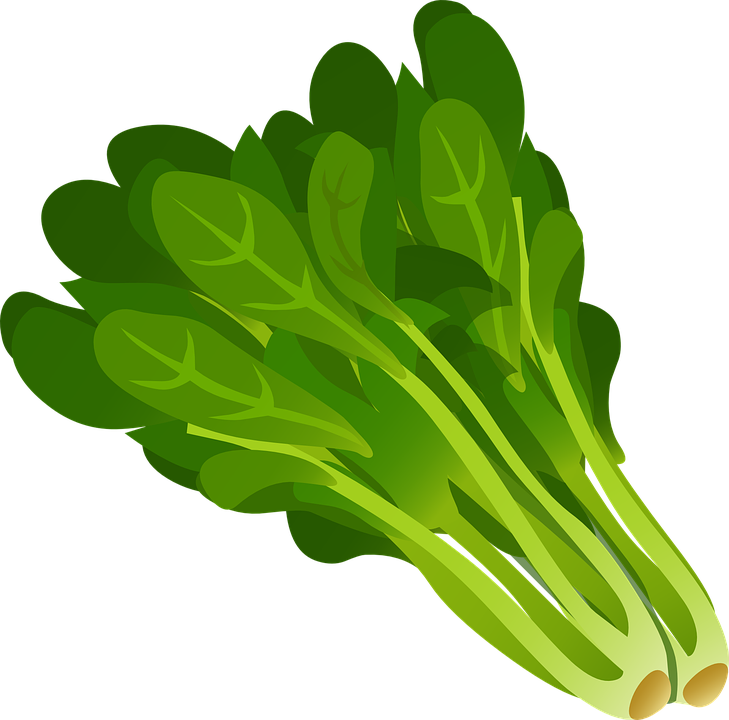 Leaves clipart leaft. Green spinach leaf free