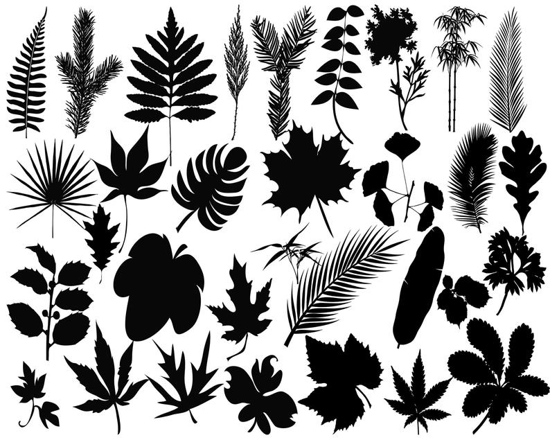 Leaves clipart leaft. Silhouette leaf vector svg