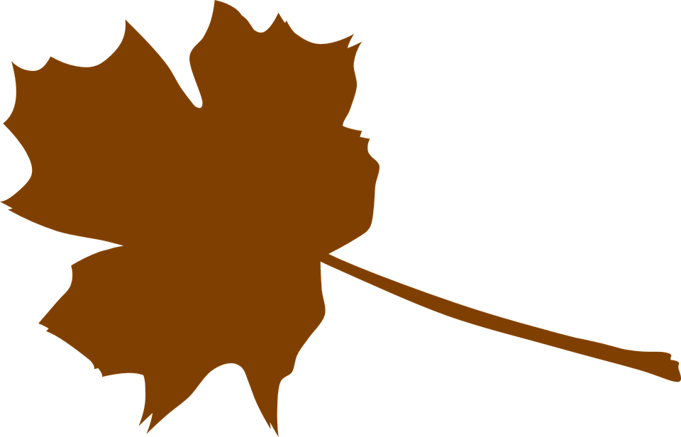 Maple leaf brown free. Leaves clipart outline