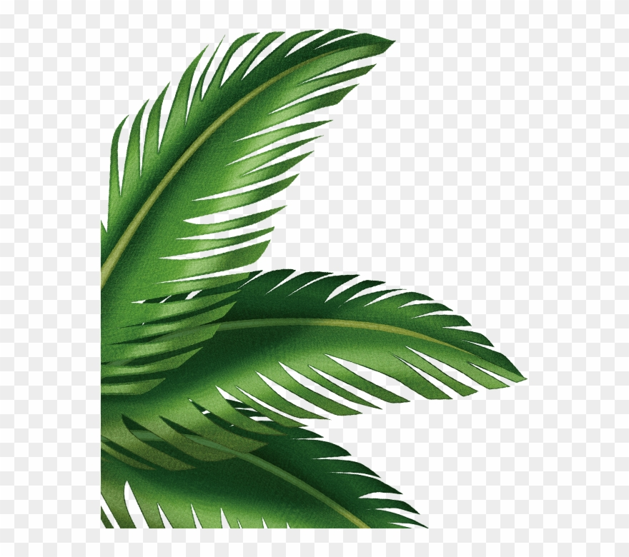 Palm Clipart Palm Leaf Picture 3044889 Palm Clipart Palm Leaf ✓ free for commercial use ✓ high quality images. picture 3044889 palm clipart palm leaf