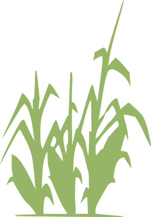 Grass clipart crop. Rows cliparts free collection