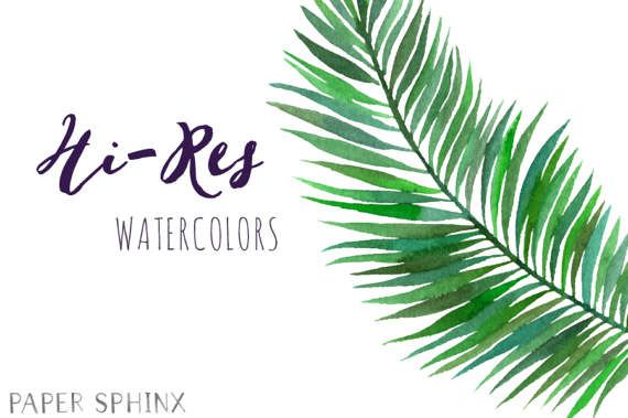Tropical leaves . Palm clipart watercolor