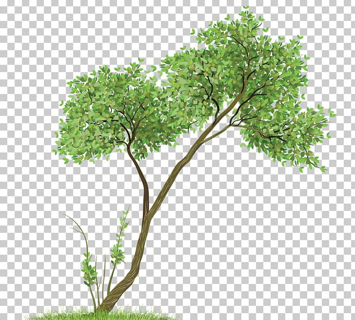 Leaves clipart tree paper. Drawing watercolor painting png