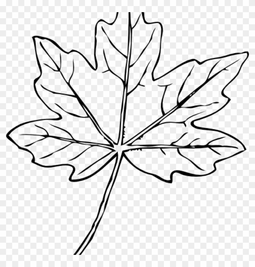 Leaves clipart vector. Maple leaf clip art