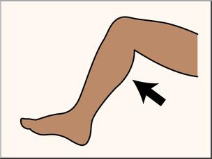 leg - Kids | Britannica Kids | Homework Help