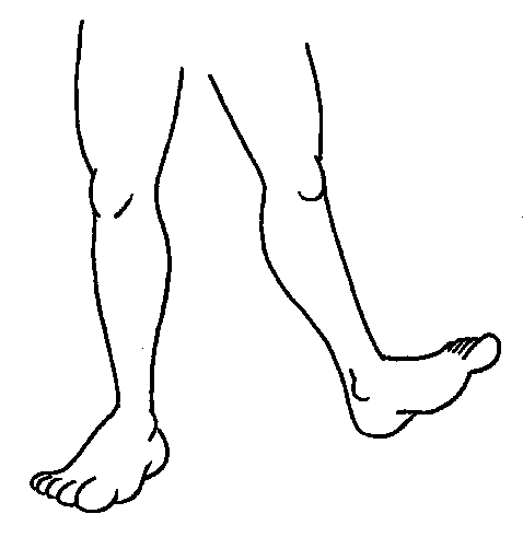 . Legs clipart two