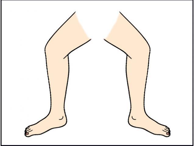 Free legz download clip. Legs clipart two