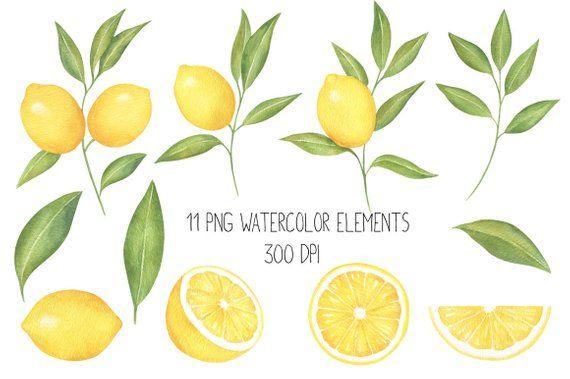 Lemon watercolor print . Lemons clipart citrus