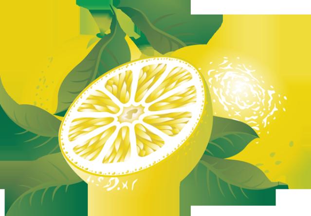 Lemon citrus clipartix . Lemons clipart fruit
