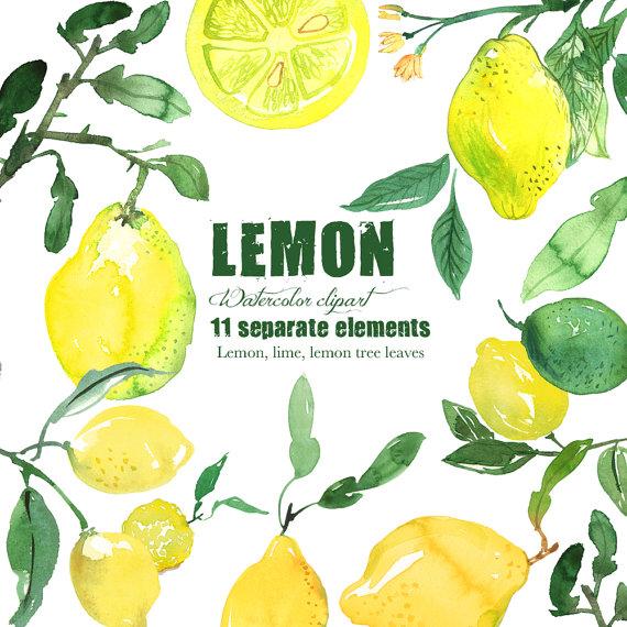 Lemon watercolor citrus . Lemons clipart painted