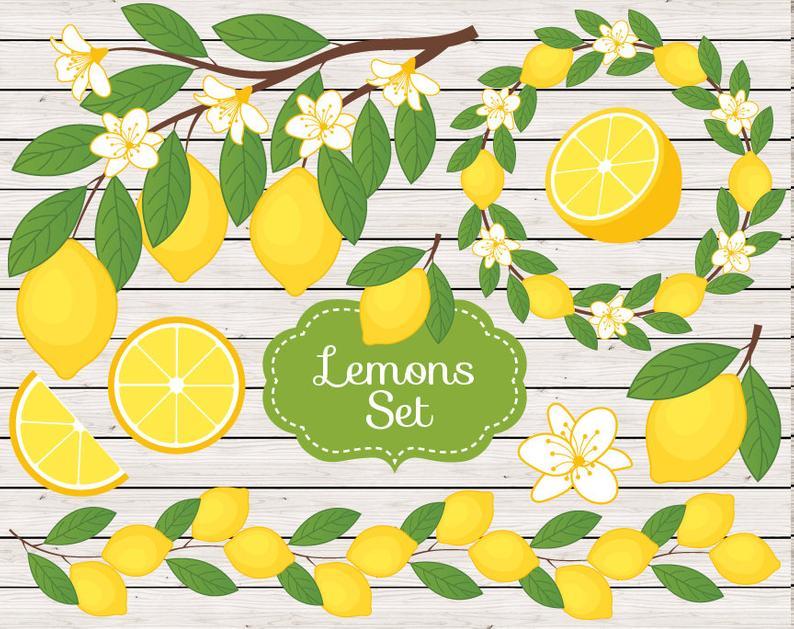 Lemons clipart citrus. Lemon vector rustic branch