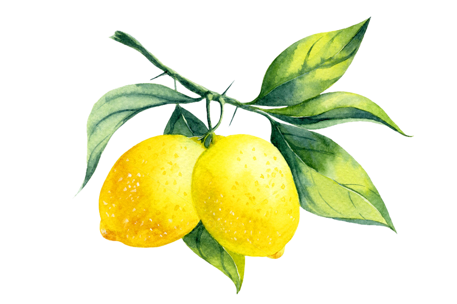 lemons clipart watercolor #123872717