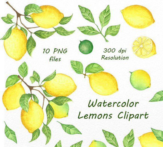 Lemons clipart illustration. Watercolor lemon clip art