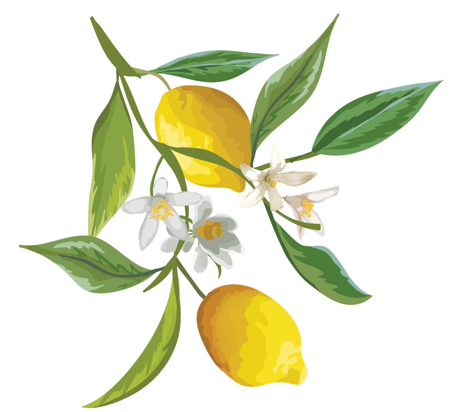 The lovely just one. Lemons clipart lemon leaf