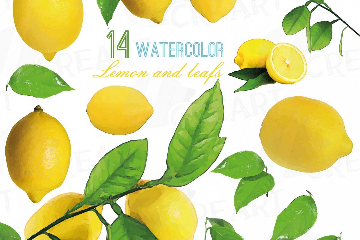 Watercolor branch and leaves. Lemons clipart lemon leave