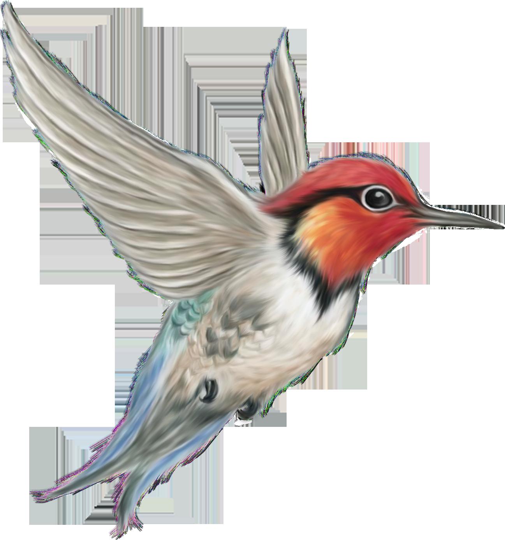 Pear clipart lukisan. Hummingbird clip art renders