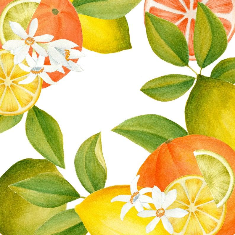 Watercolor citrus illustration fruits. Lemons clipart orange