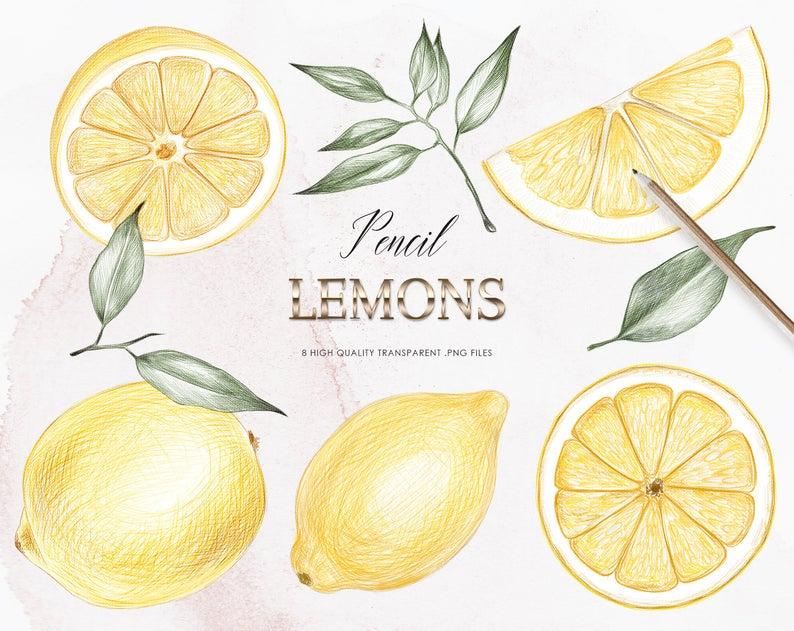 Lemons clipart vintage.  pencil art hand