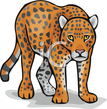 Leopard clipart. Free