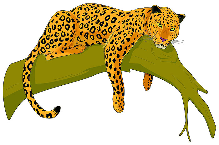 Leopard clipart. Pictures panda free images