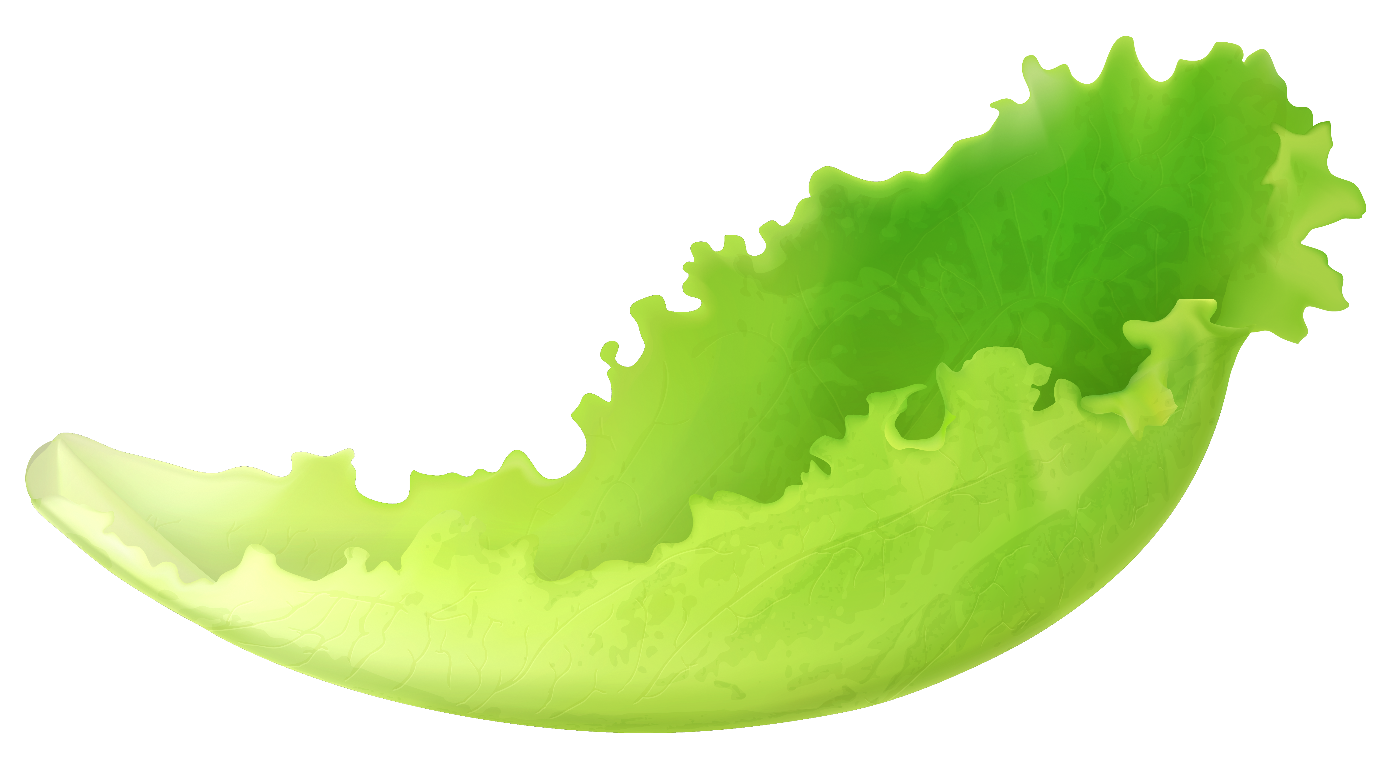 Leaf png gallery yopriceville. Lettuce clipart