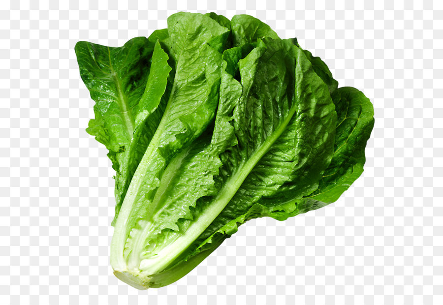 Lettuce clipart. Sandwich wrap iceberg clip