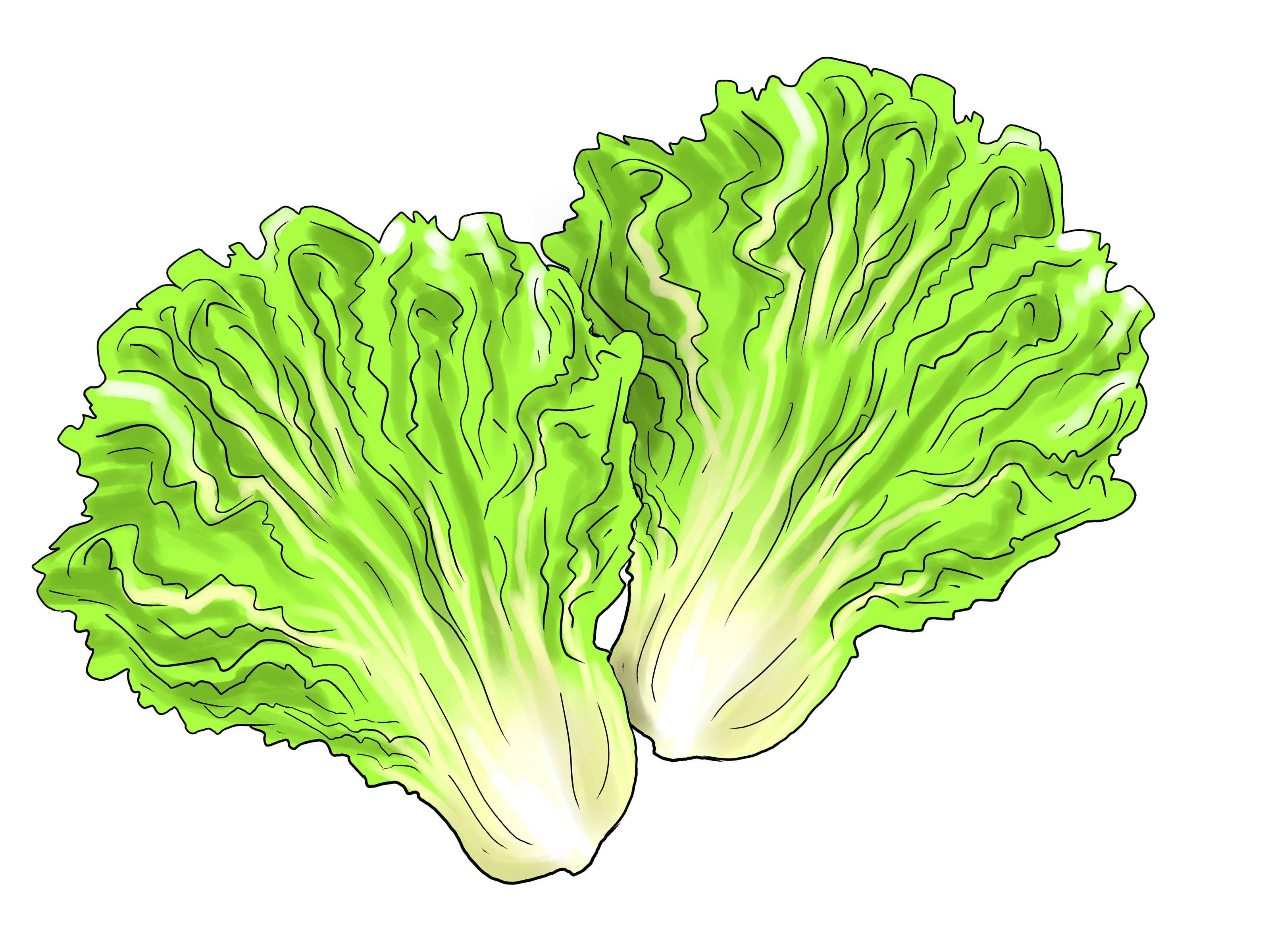 Hd leaf cdr clip. Lettuce clipart