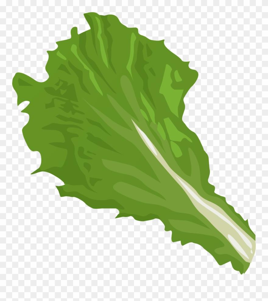 At getdrawings com leaf. Cabbage clipart lettuce slice