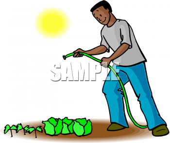 Image of an african. Lettuce clipart american