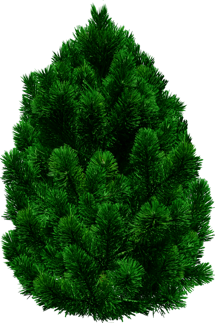 Tree forty three isolated. Lettuce clipart american