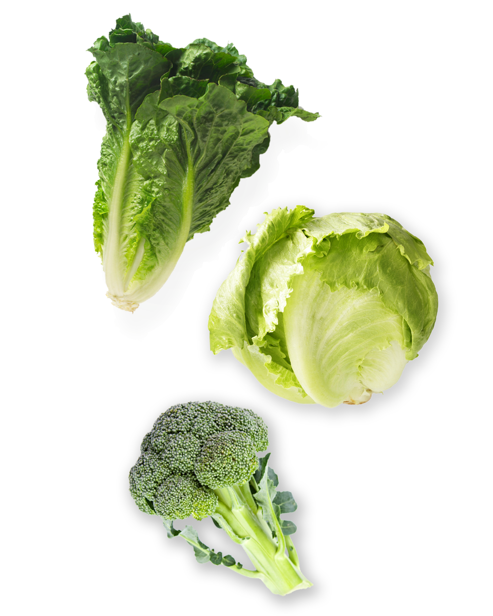 Lettuce clipart broccoli. Welcome to pacific marketing