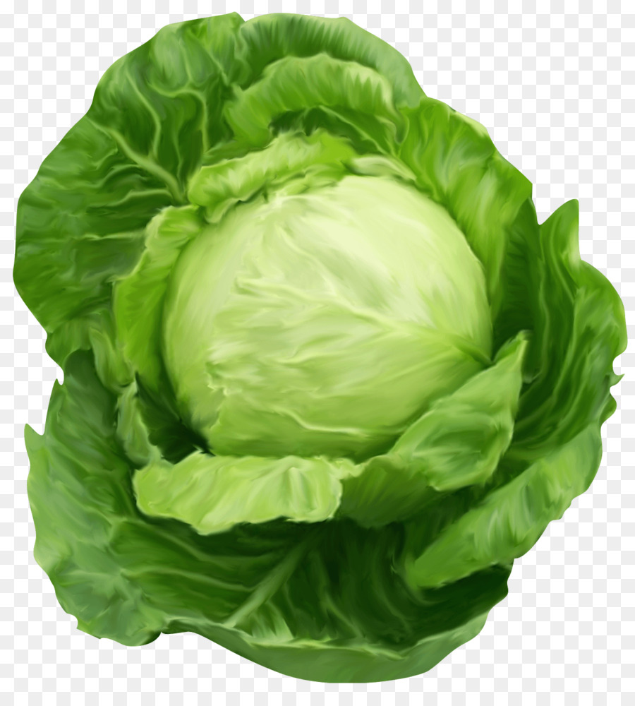 Lettuce clipart cabbage. Spring background food