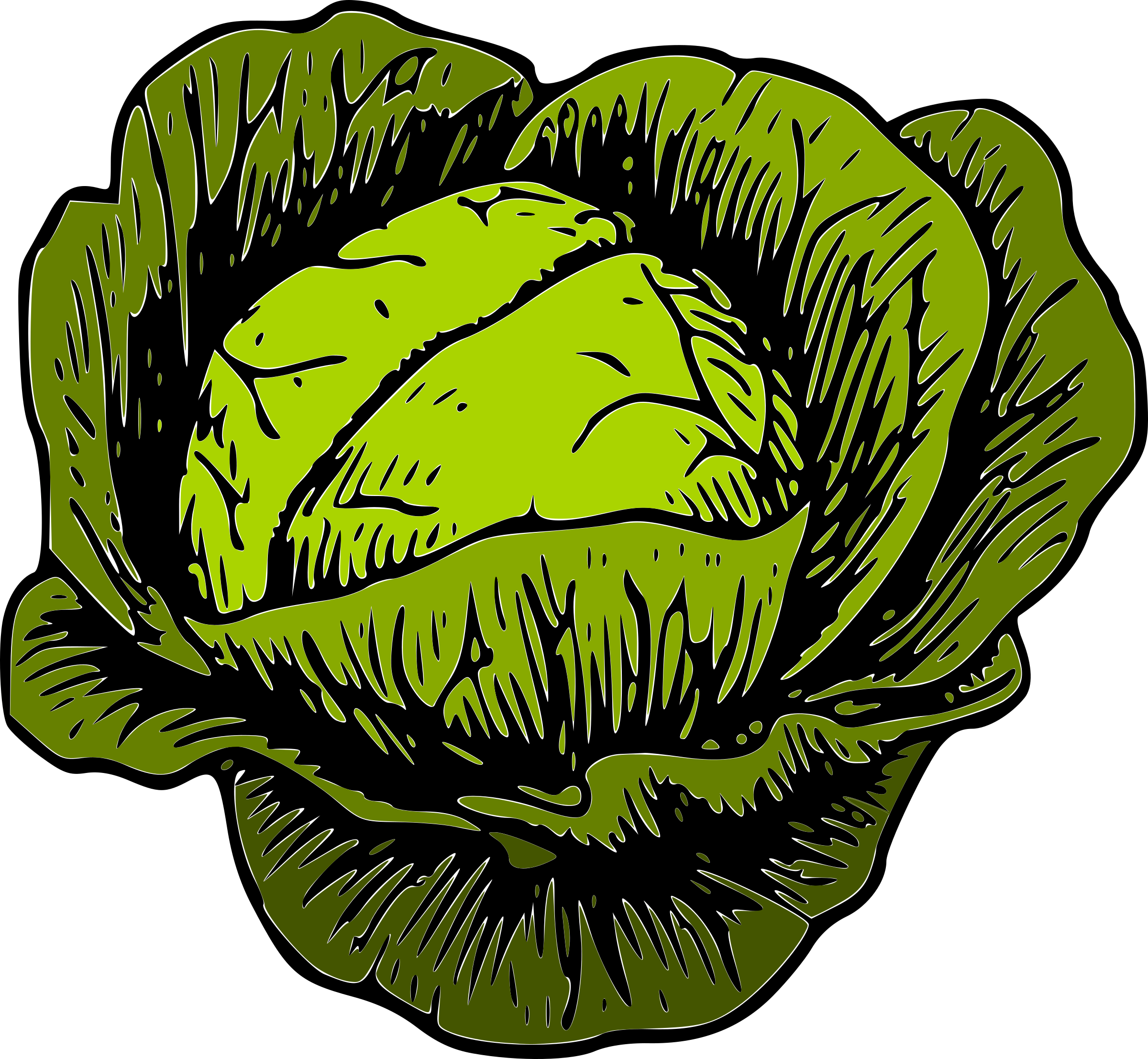 Cabbage clipart cabage. Green big image png