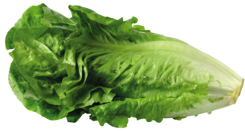 Lettuce clipart happy. Green png picture gallery